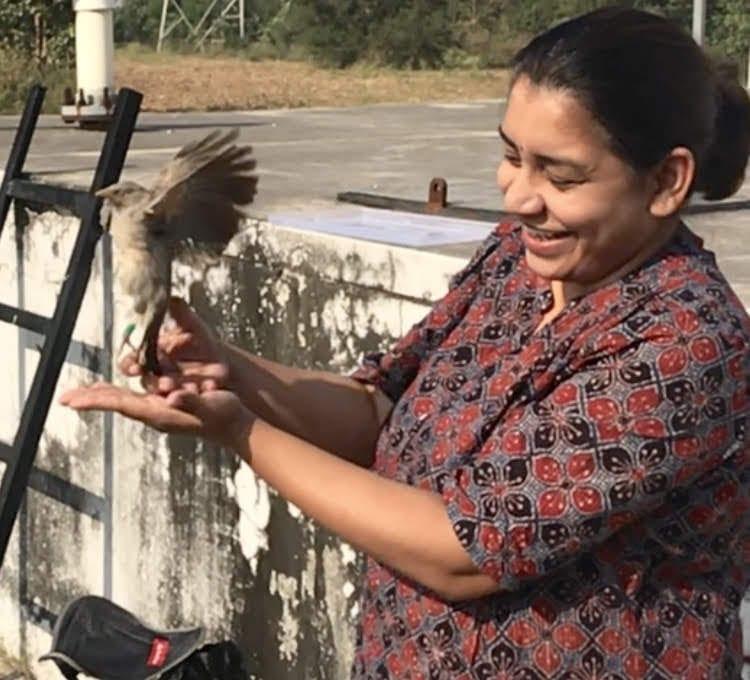 Manjari releasing a Jungle Babbler